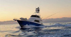 Billfish Babes Charters Marlene Hicks Topnotch Game Fishing Airlie Beach Brilliant Company